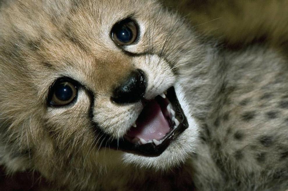 <b>Самые</b> милые животные фото » DreemPics.com - картинки и ...