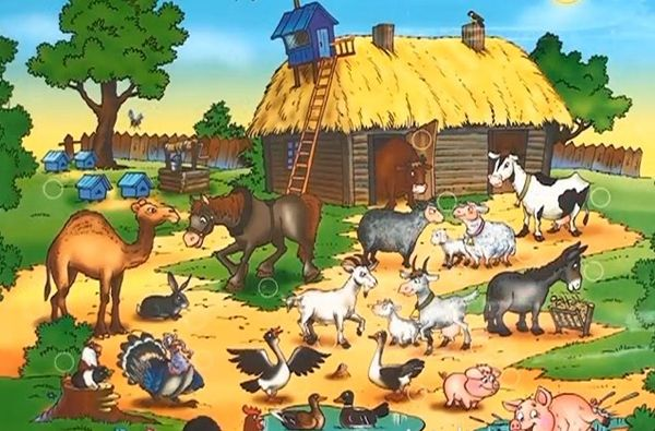 Смотреть бесплатные картинки домашних животных