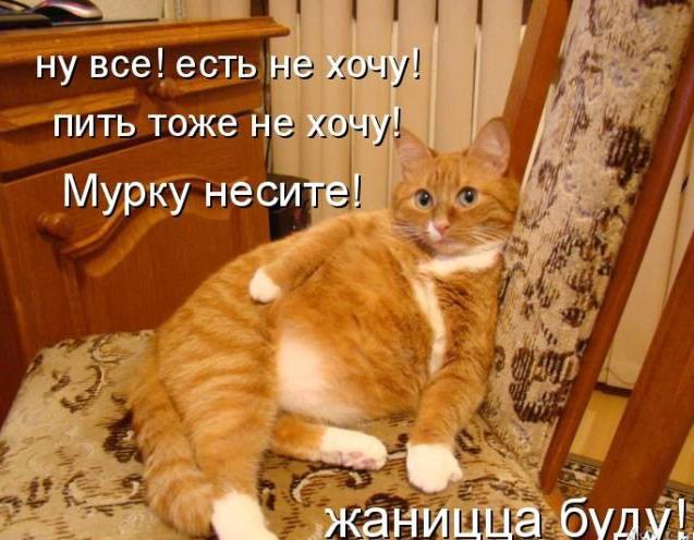 Прикольные картинки с котами » DreemPics.com ...: dreempics.com/prikol/5257-Prikolnee_kartinki_s_kotami.html