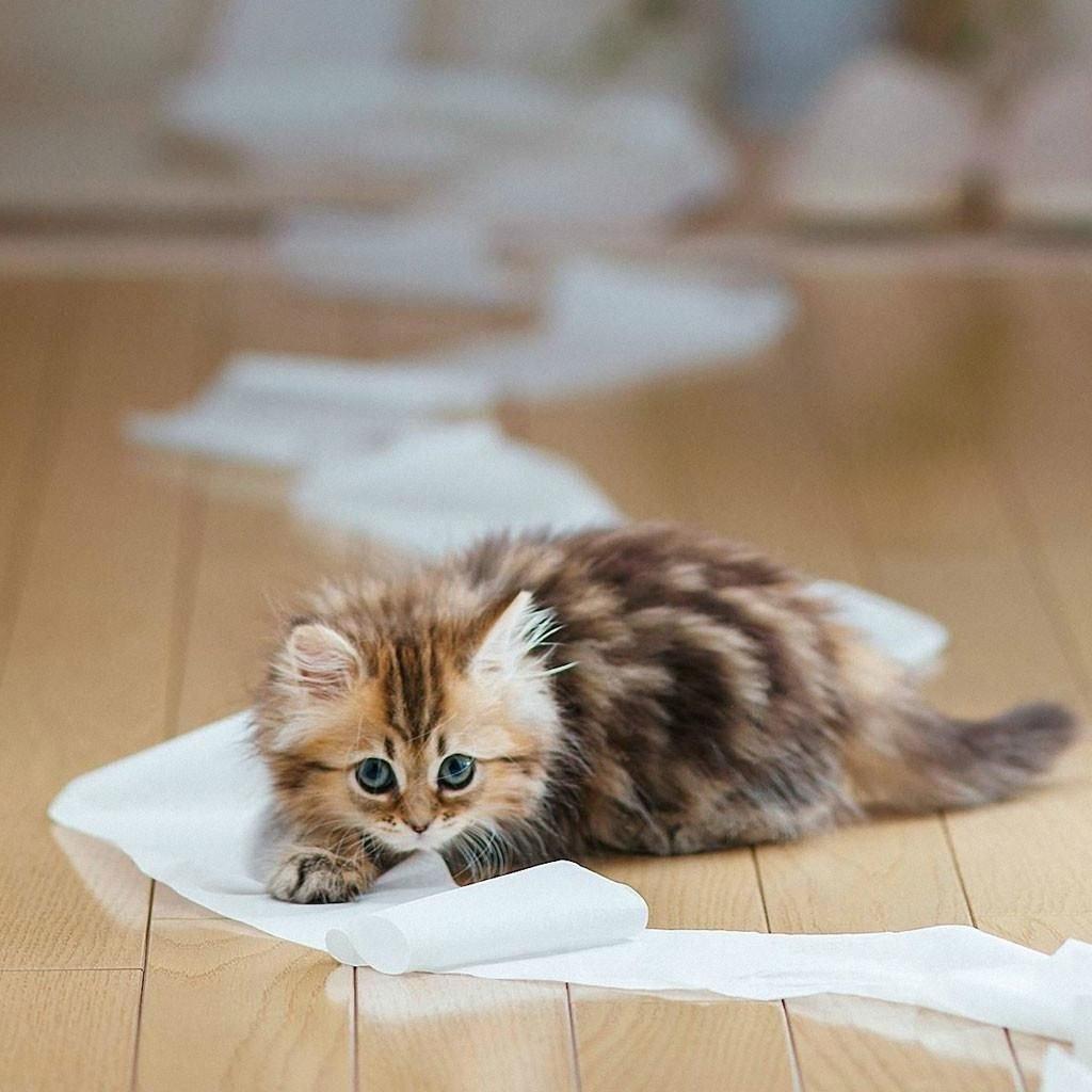 Милые животные » DreemPics.com - картинки и рисунки на ...
