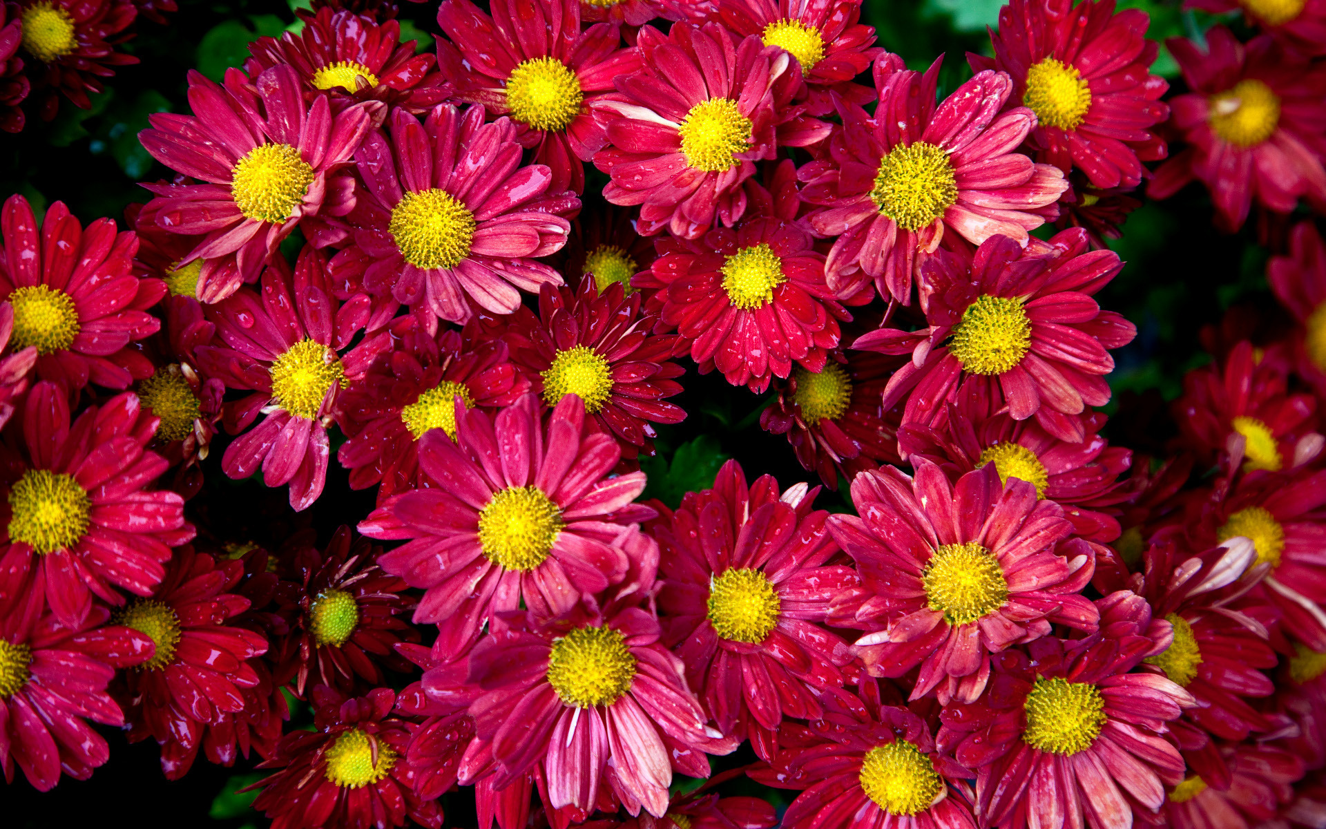 цветы красиво