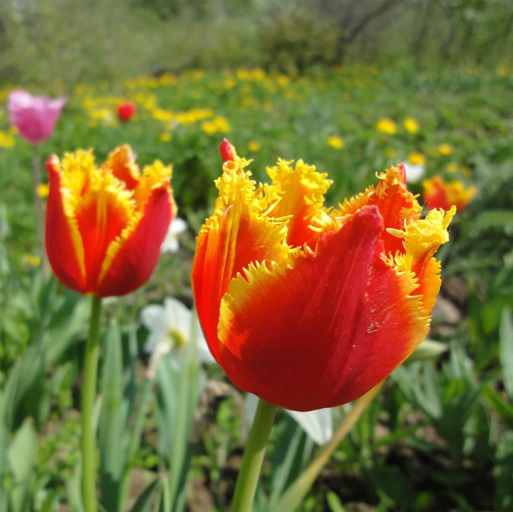 Красивые цветы в мире фото