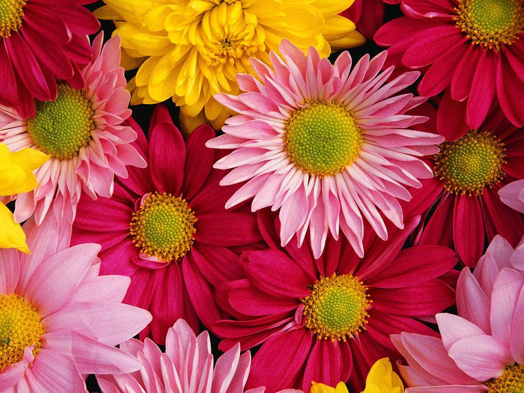 цветы фото онлайн бесплатно: