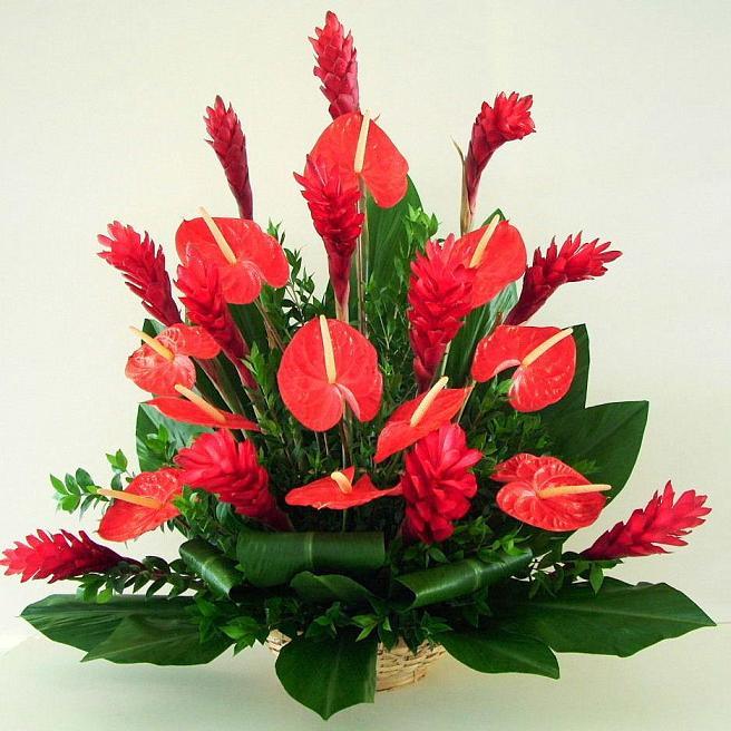 Мужской цветок счастья комнатный