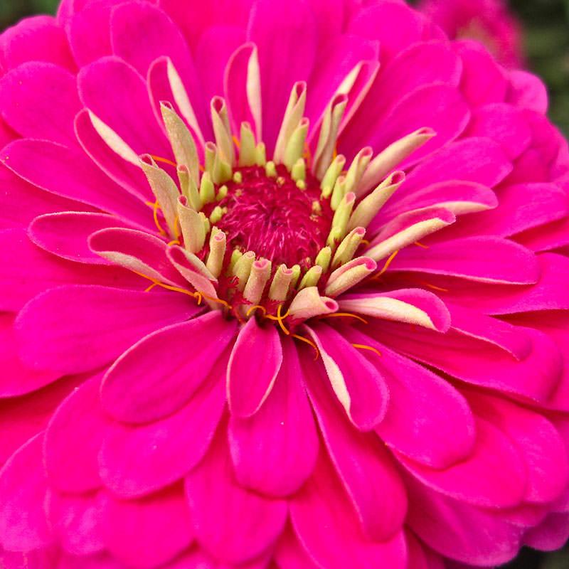 Домашние цветы которые я выращу