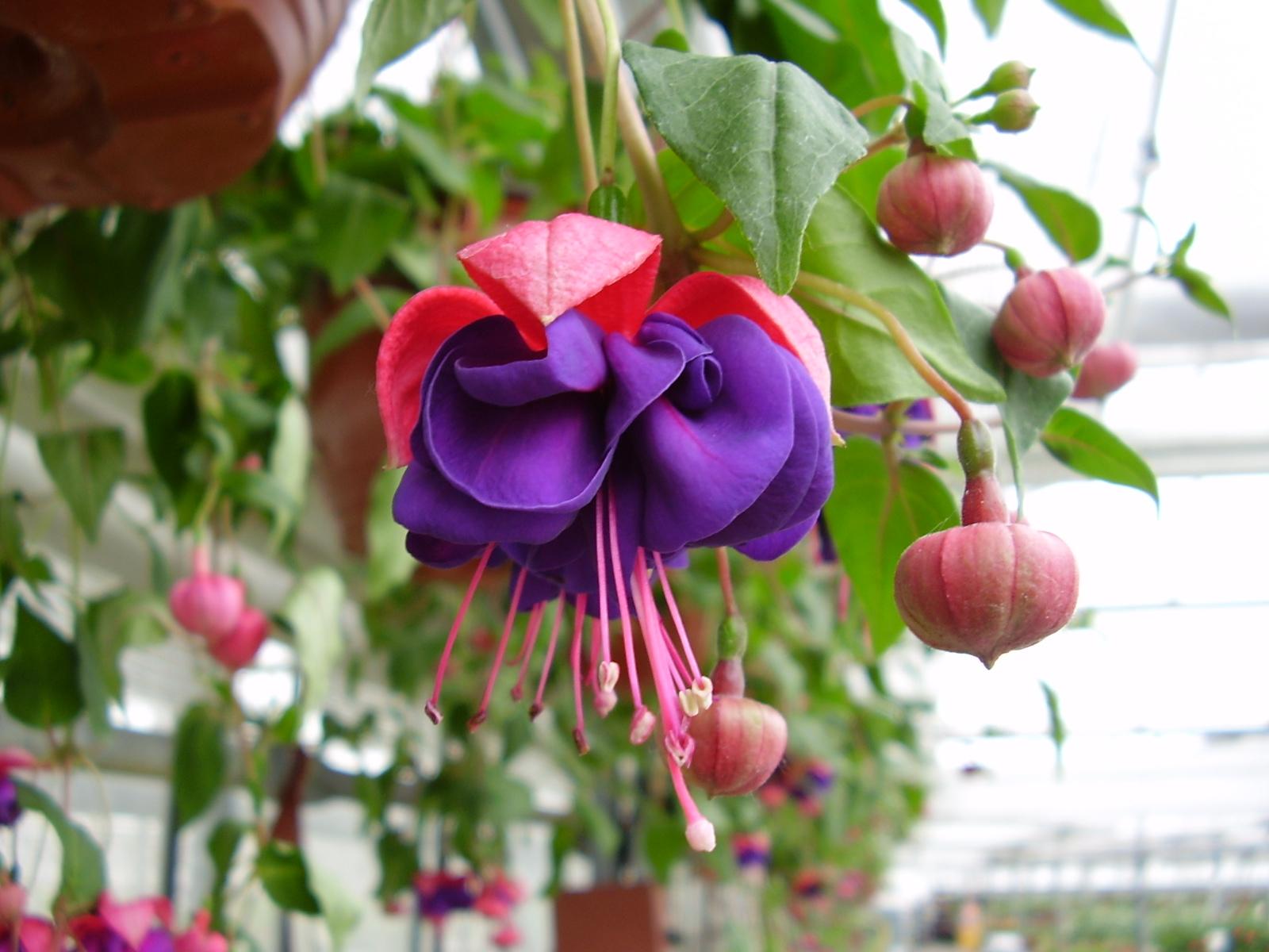 Цветы срезка каталог с фотографиями и названиями