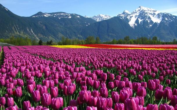 картинки на рабочий стол цветы самые № 517244 без смс
