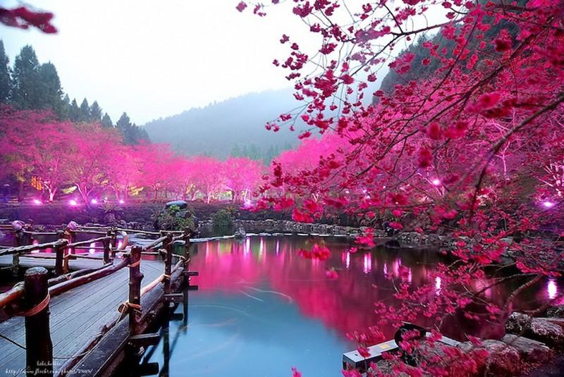 Стихи о цветах  Что такое любовь