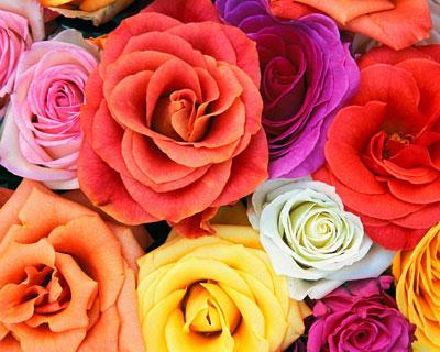 разновидности цветов в картинках: