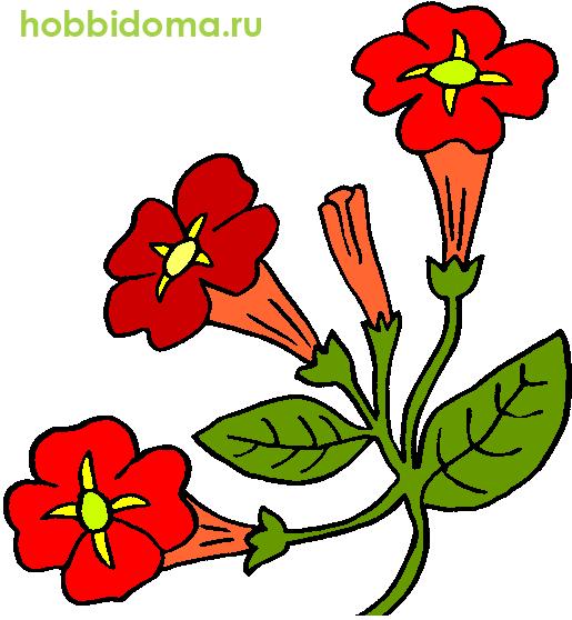 цветы рисованные цветные картинки