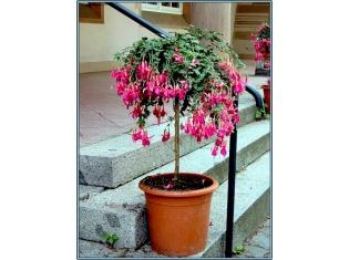 Все названия садовых цветов с картинками