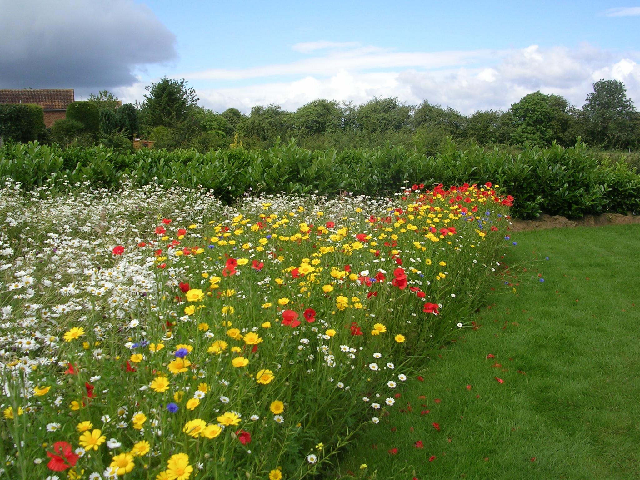 Живые полевые цветы фото