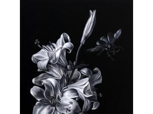 Красивые черно белые картинки цветов