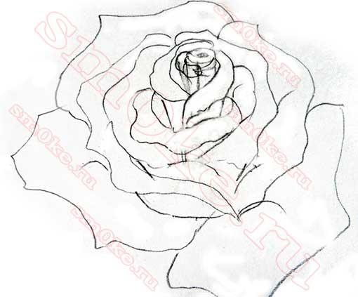 Как нарисовать розу карандашом картинки красивые