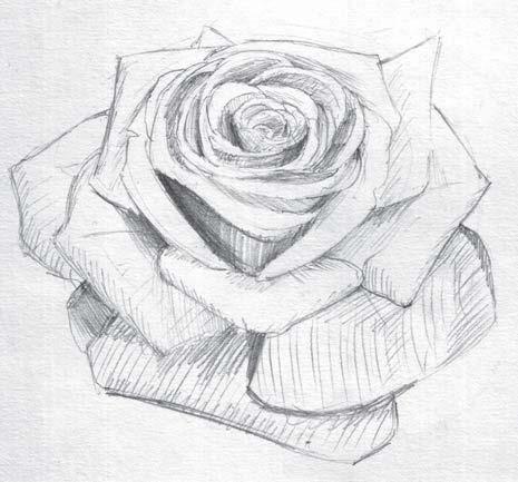 Картинки цветов нарисованных простым карандашом 7