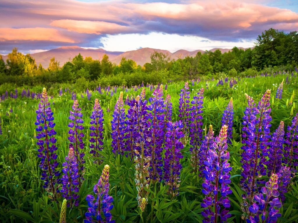 Самые неприхотливые цветы многолетники