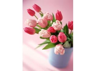 Картинки цветов красивые тюльпаны