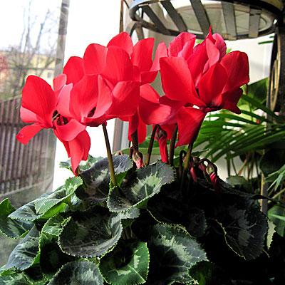Цветы картина легко