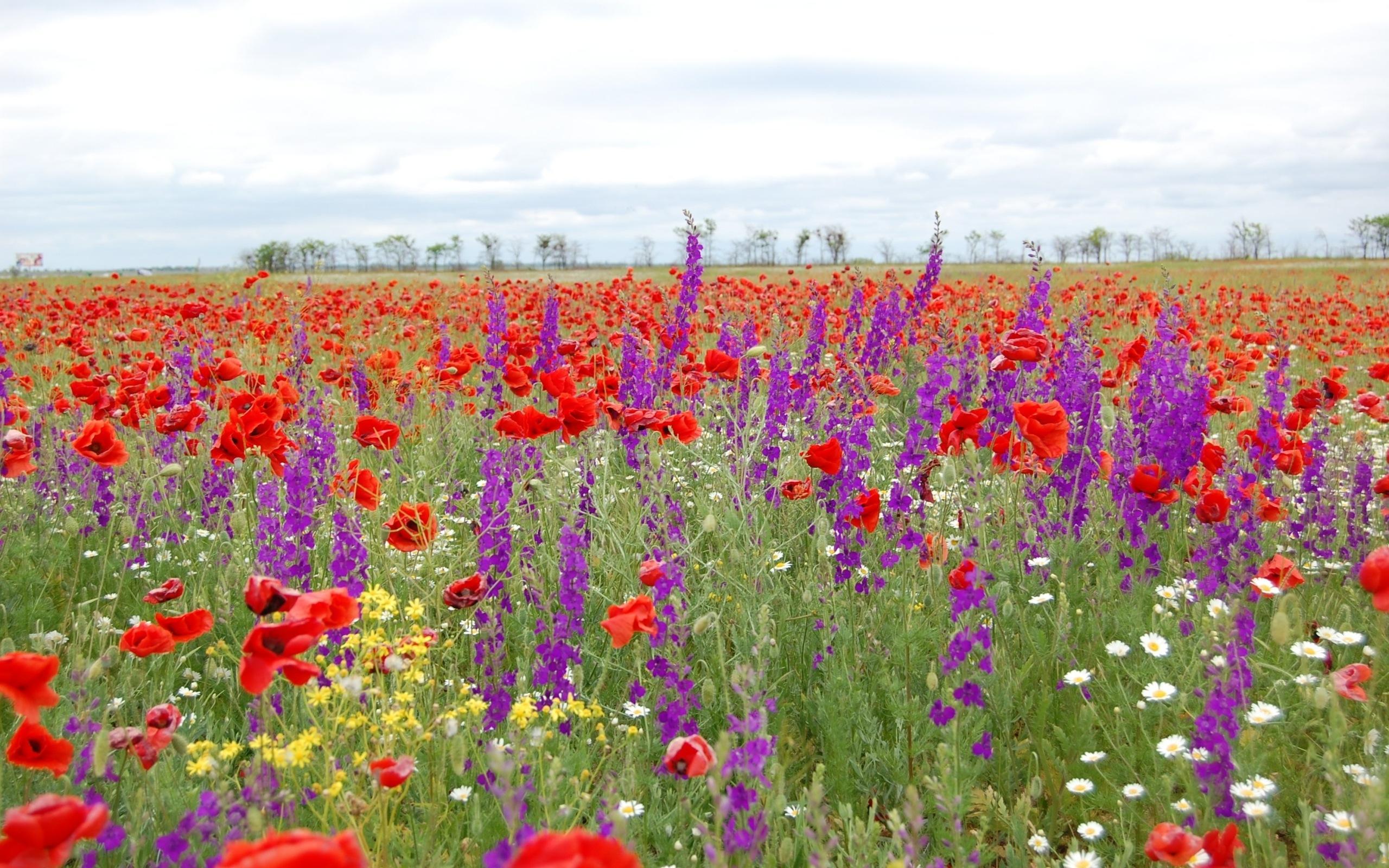 Поле с полевыми цветами фото и