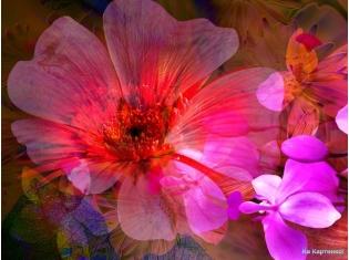 Цветы красивые dreempics com лучшие фото