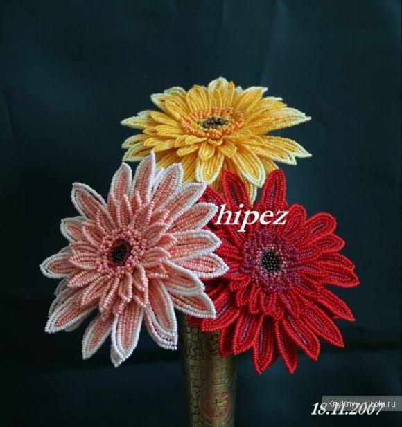 Цветок герберы картинки 5