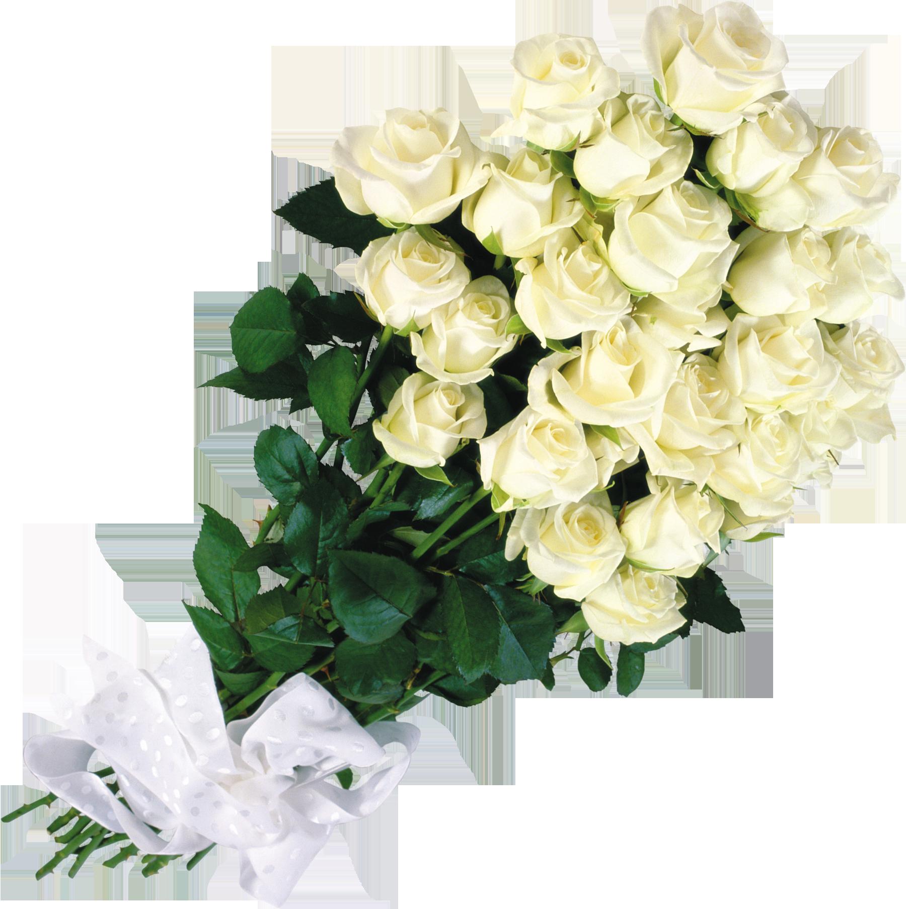 Большие картинки на рабочий стол красивые розы 3