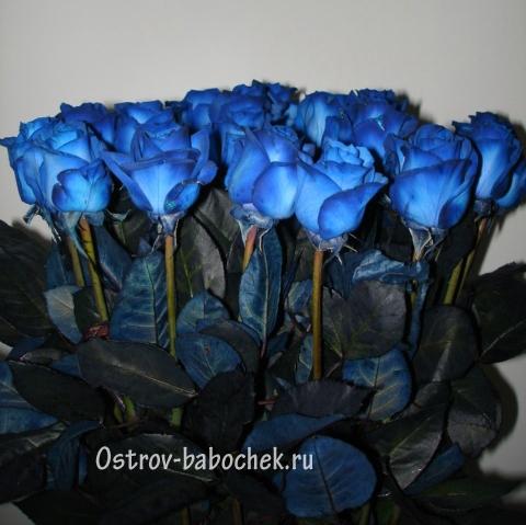 Скачать картинку синие розы