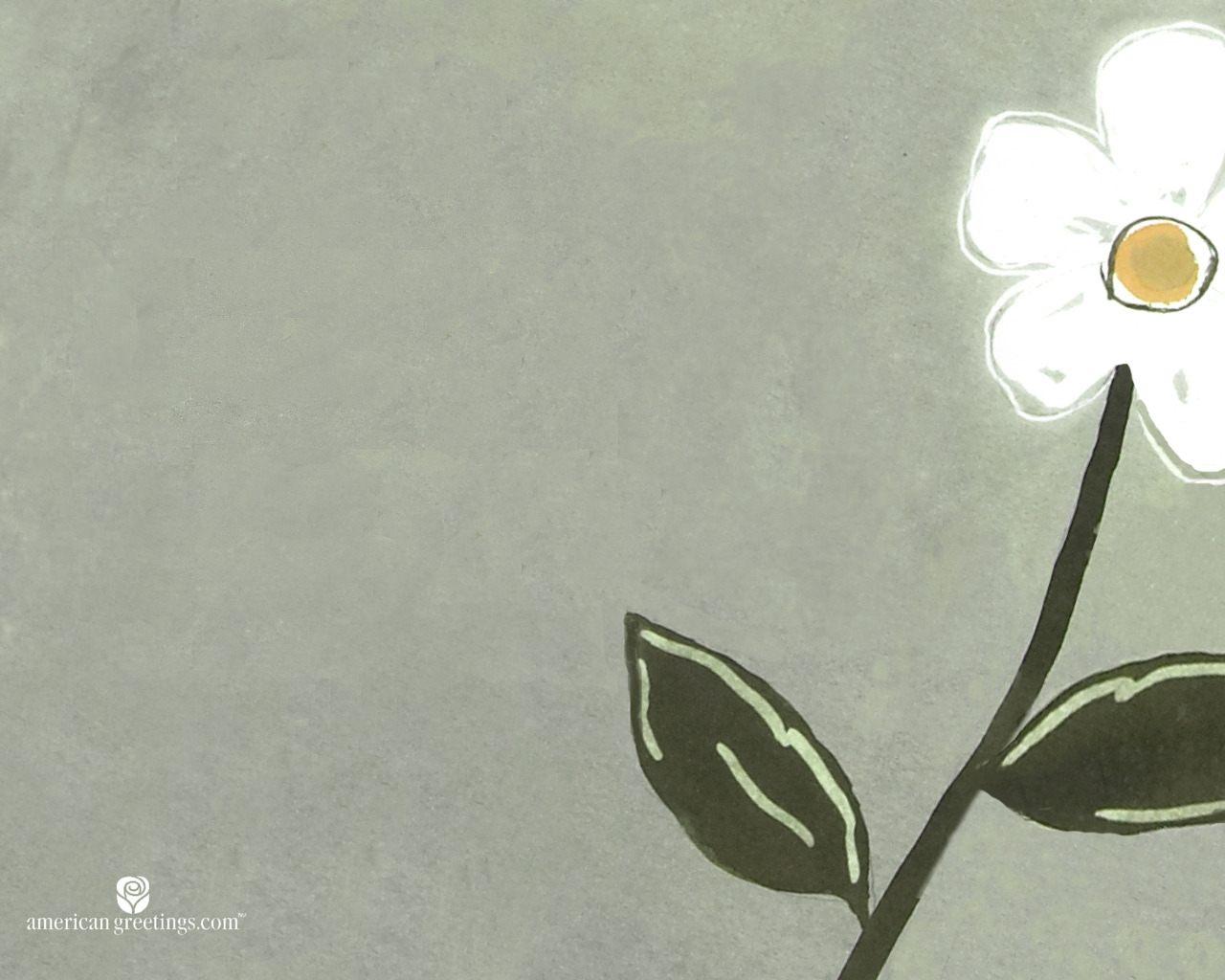 Цветок ромашка фото » DreemPics.com - картинки и рисунки ...