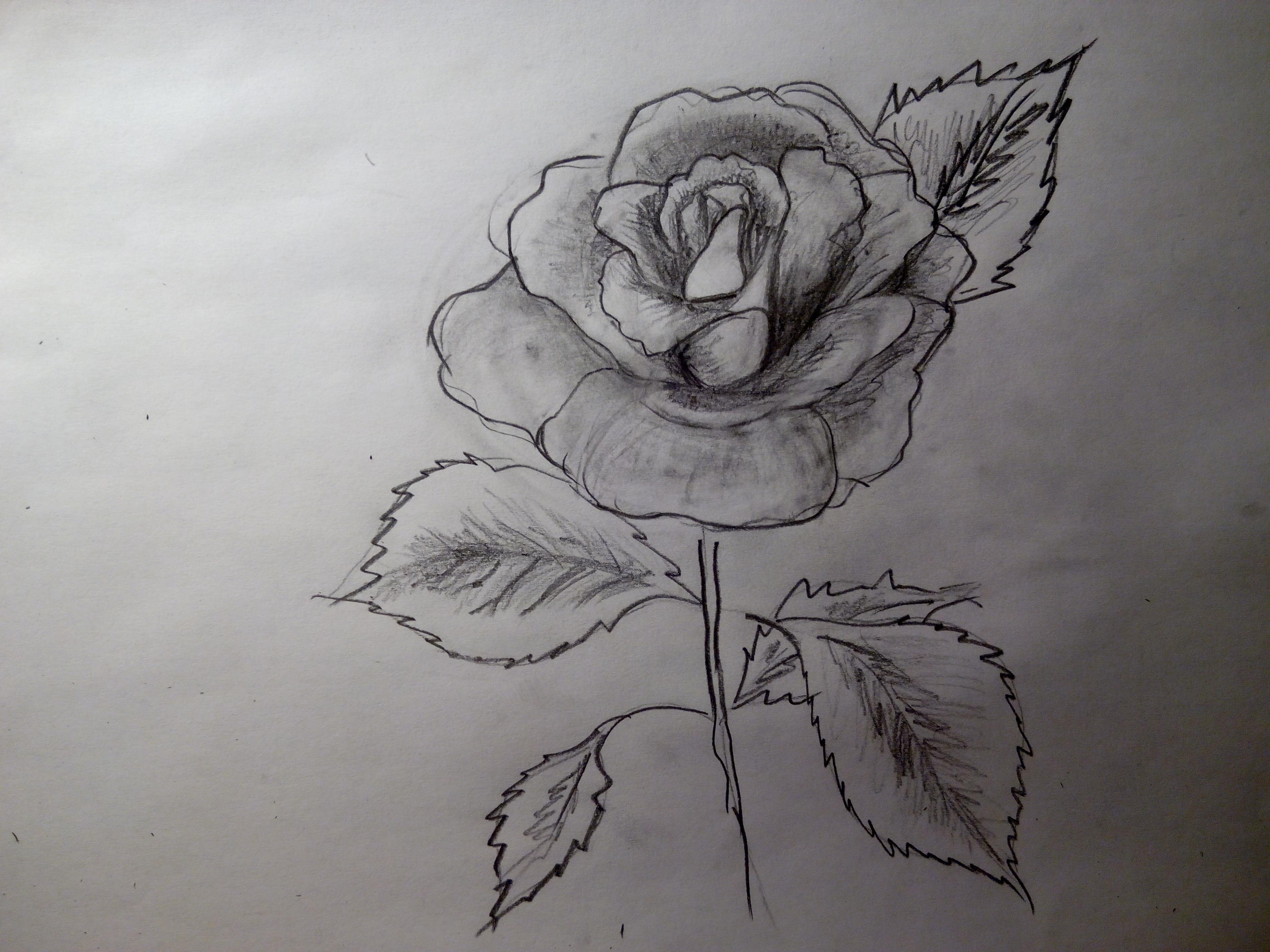 Маки рисунки