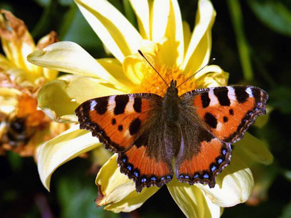 Картинки бабочки и цветы » DreemPics.com - картинки и ...