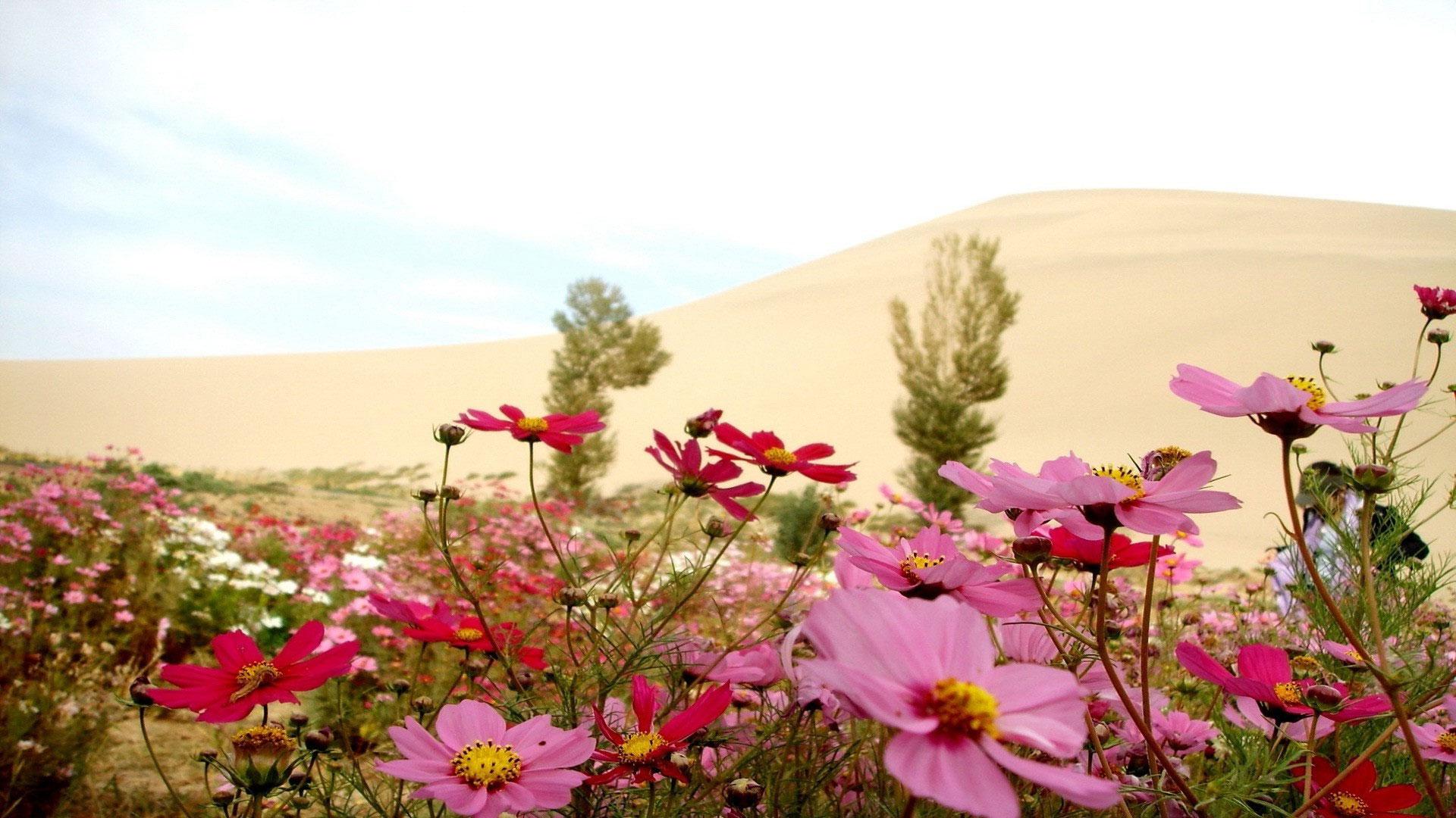 Полевые цветы фото высокого разрешения