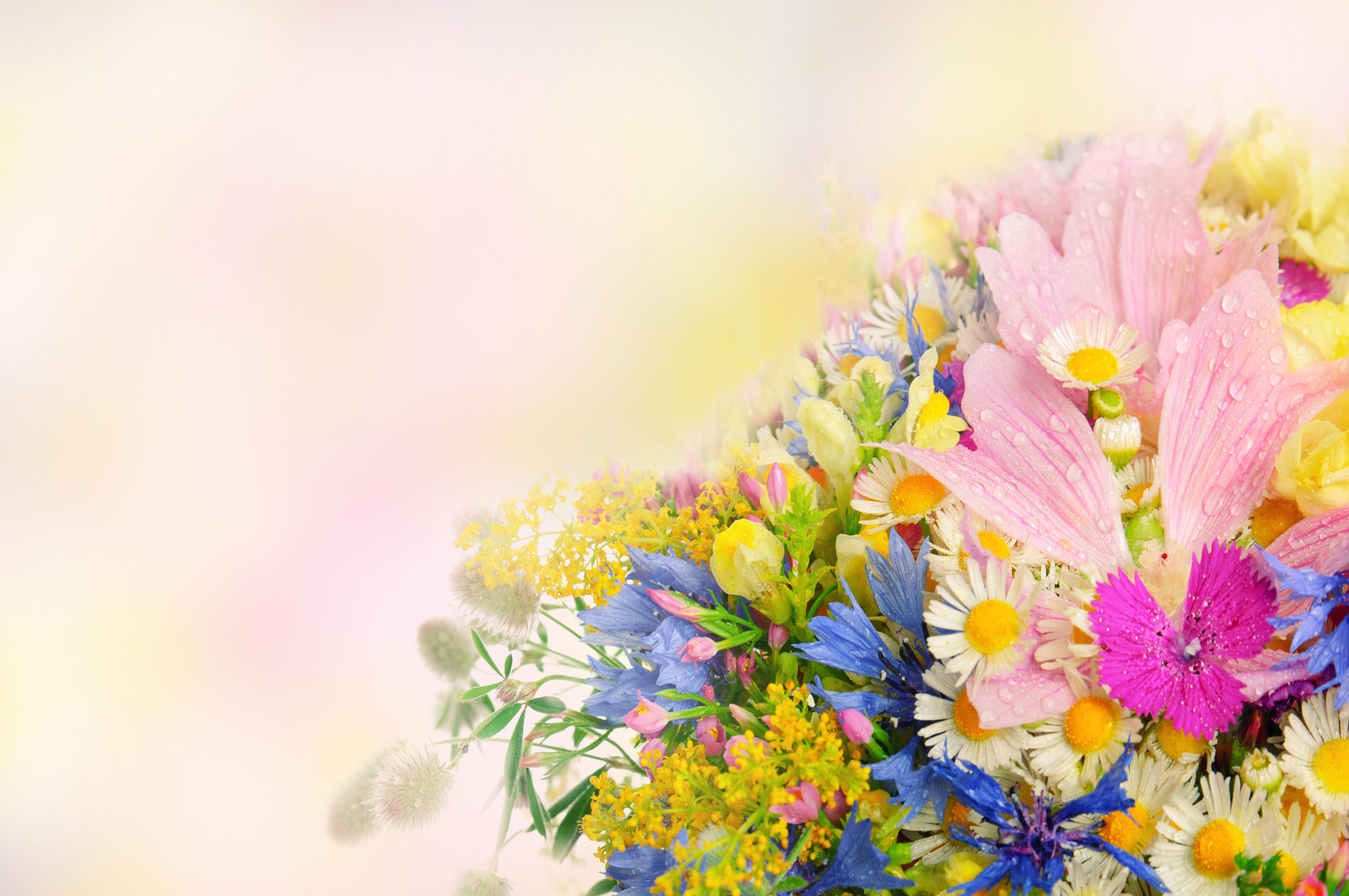Одуванчик цветы фото