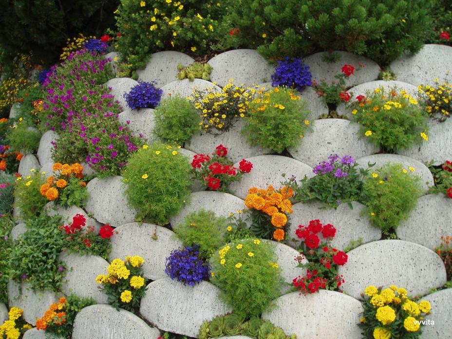 Цветы  дизайн