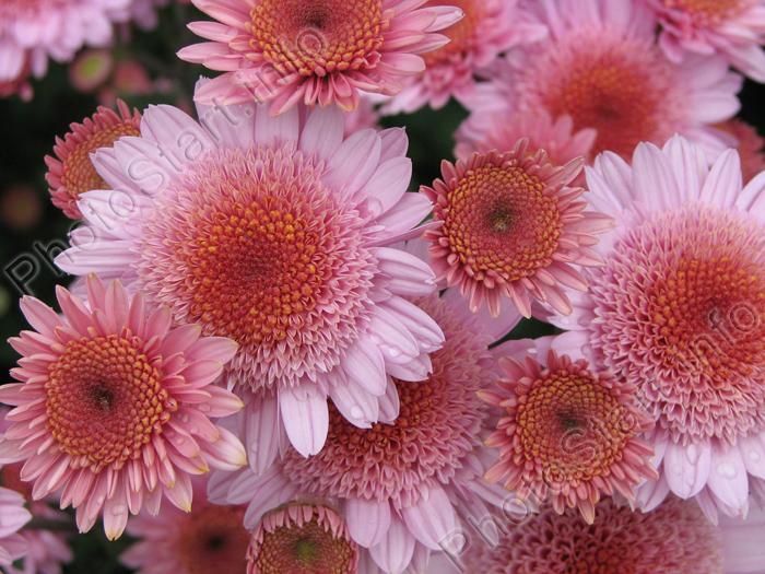 Доставка цветов в Томске купить цветы и букеты Мне розы