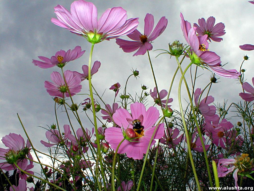 Картинки на телефон природа и цветы