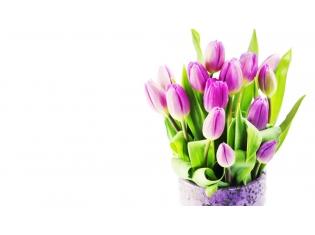 Картинки цветы тюльпаны букеты