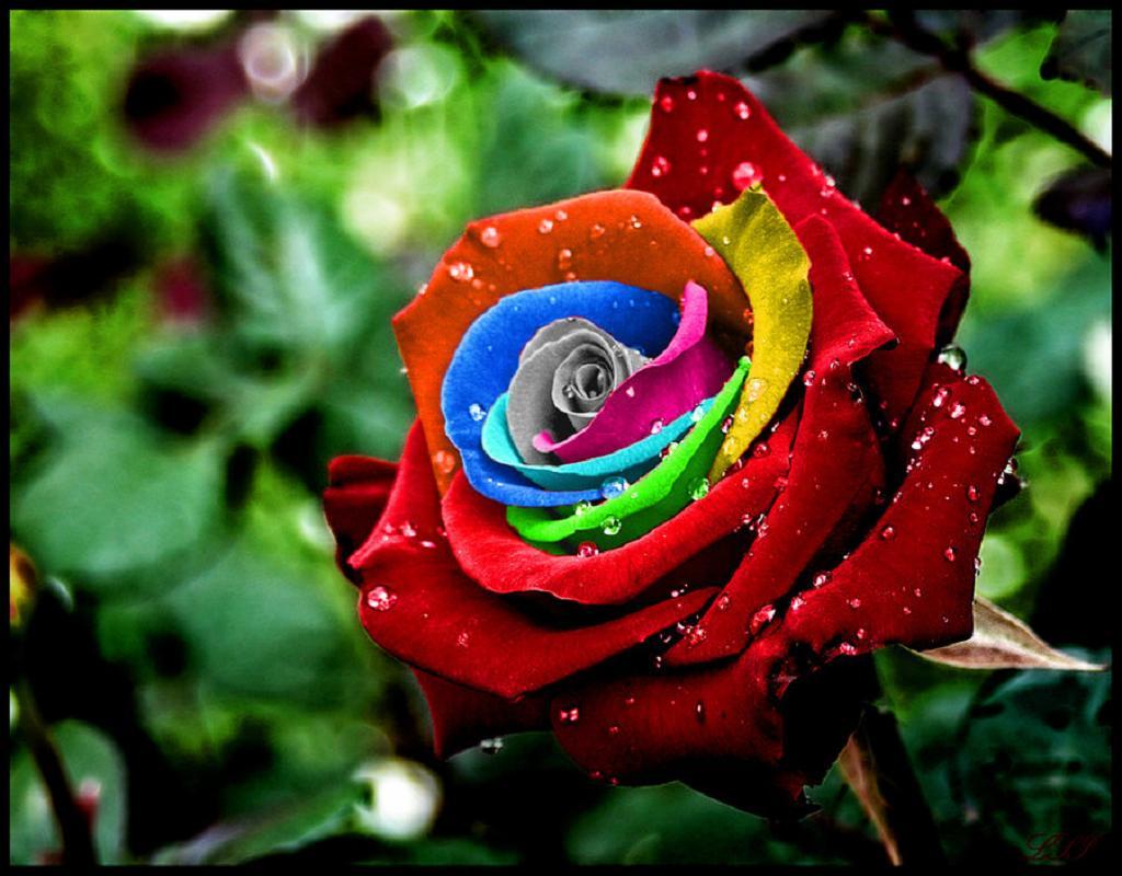 Сад непрерывного цветения декоративные кустарники