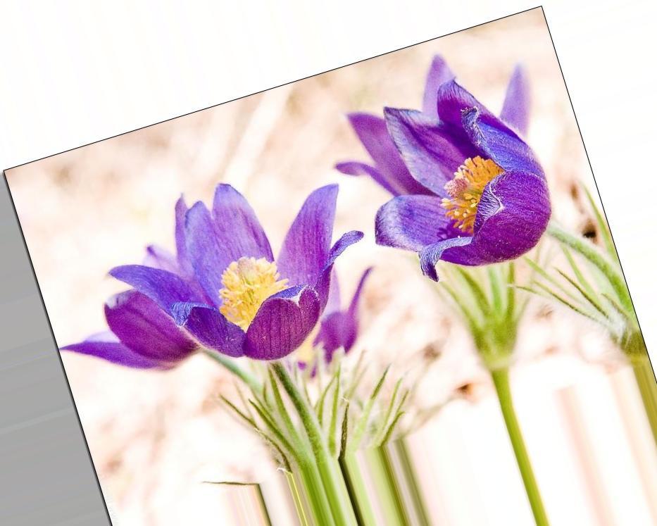 JPEG или RAW  в каком формате снимать  Фотоучебник