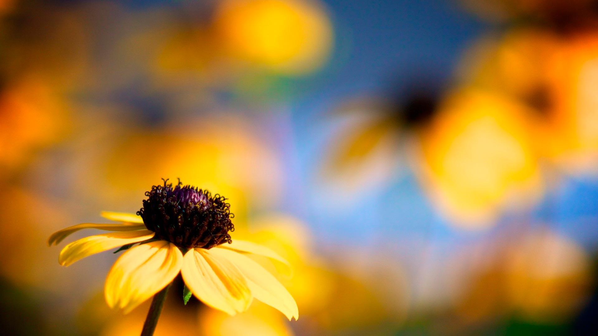 Картинки по запросу осенние цветы