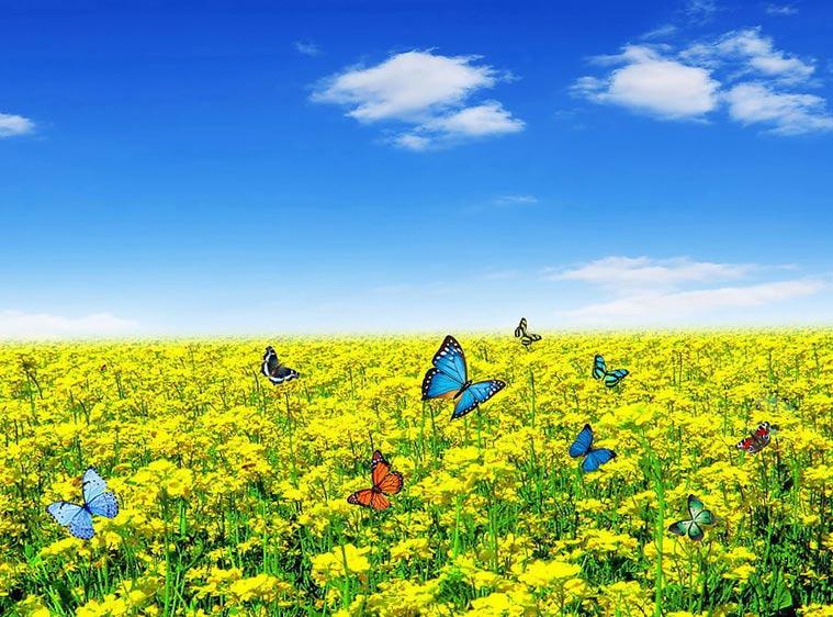 Скачать бесплатно красивые картинки о природе