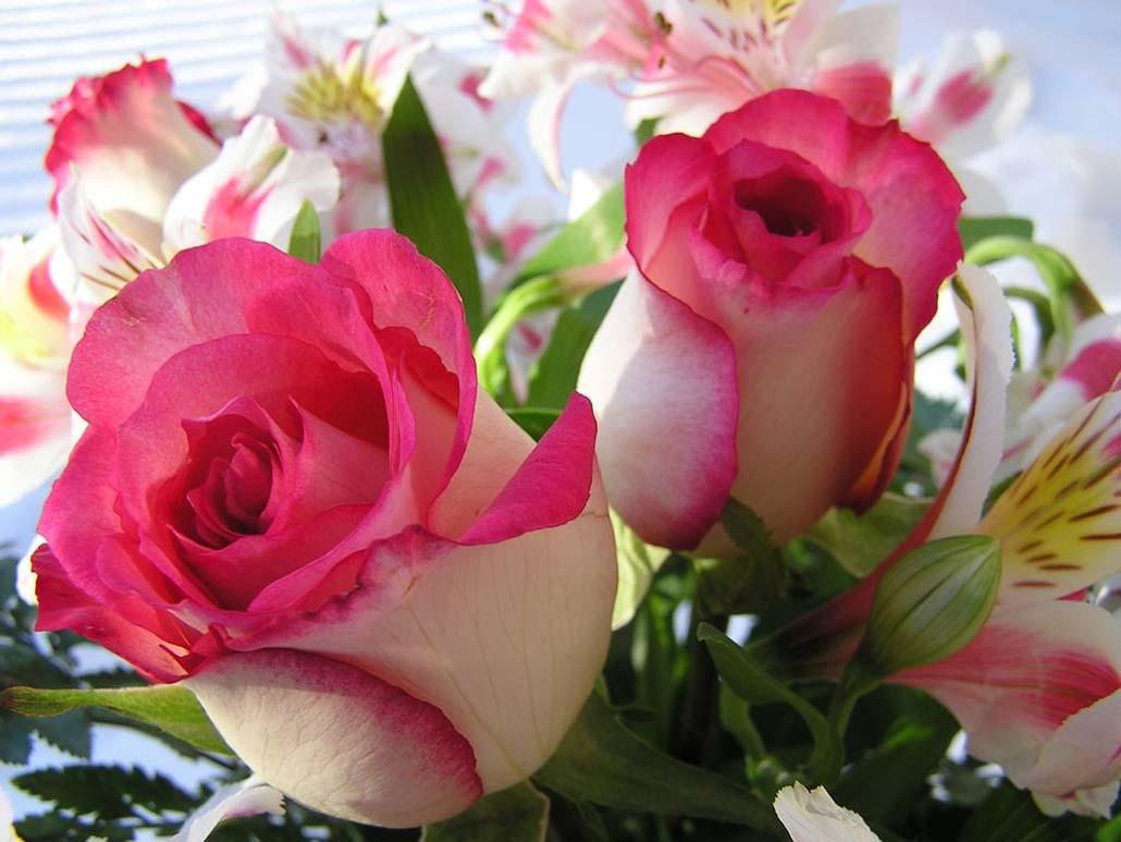Фото цветы красивые роза