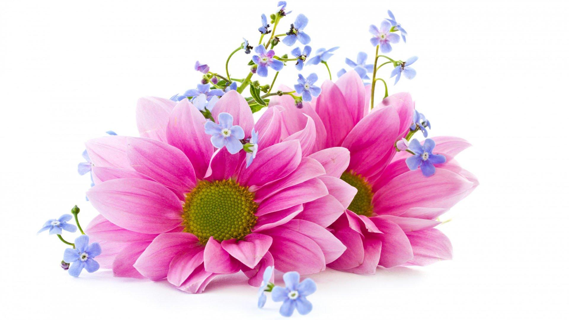 Цветы белые розы картинки 3