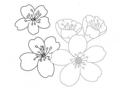 Нарисуем цветы поэтапно