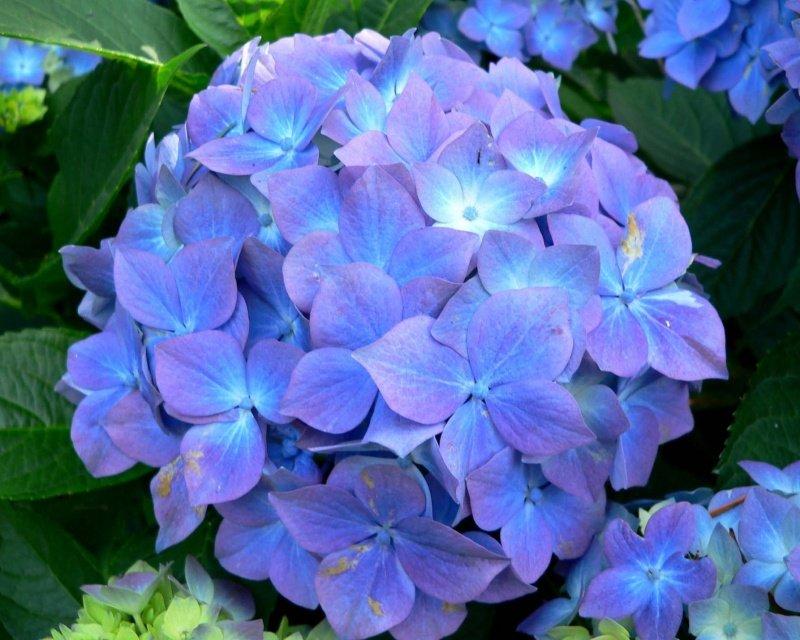 10 самых красивых цветов в мире 10 фототекст  Релаксик
