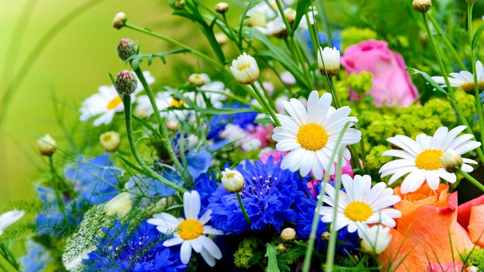 Картинки летние цветы