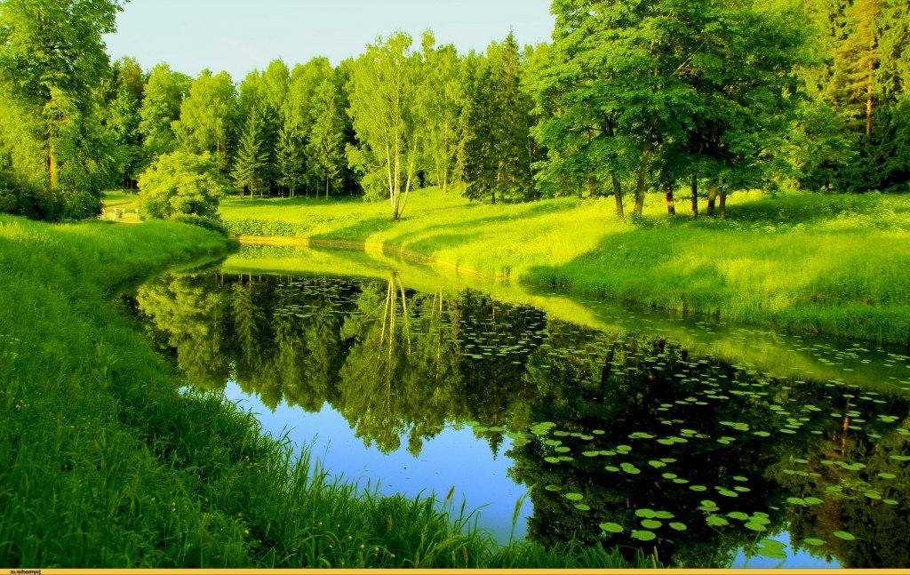 Картинки и природа и цветки