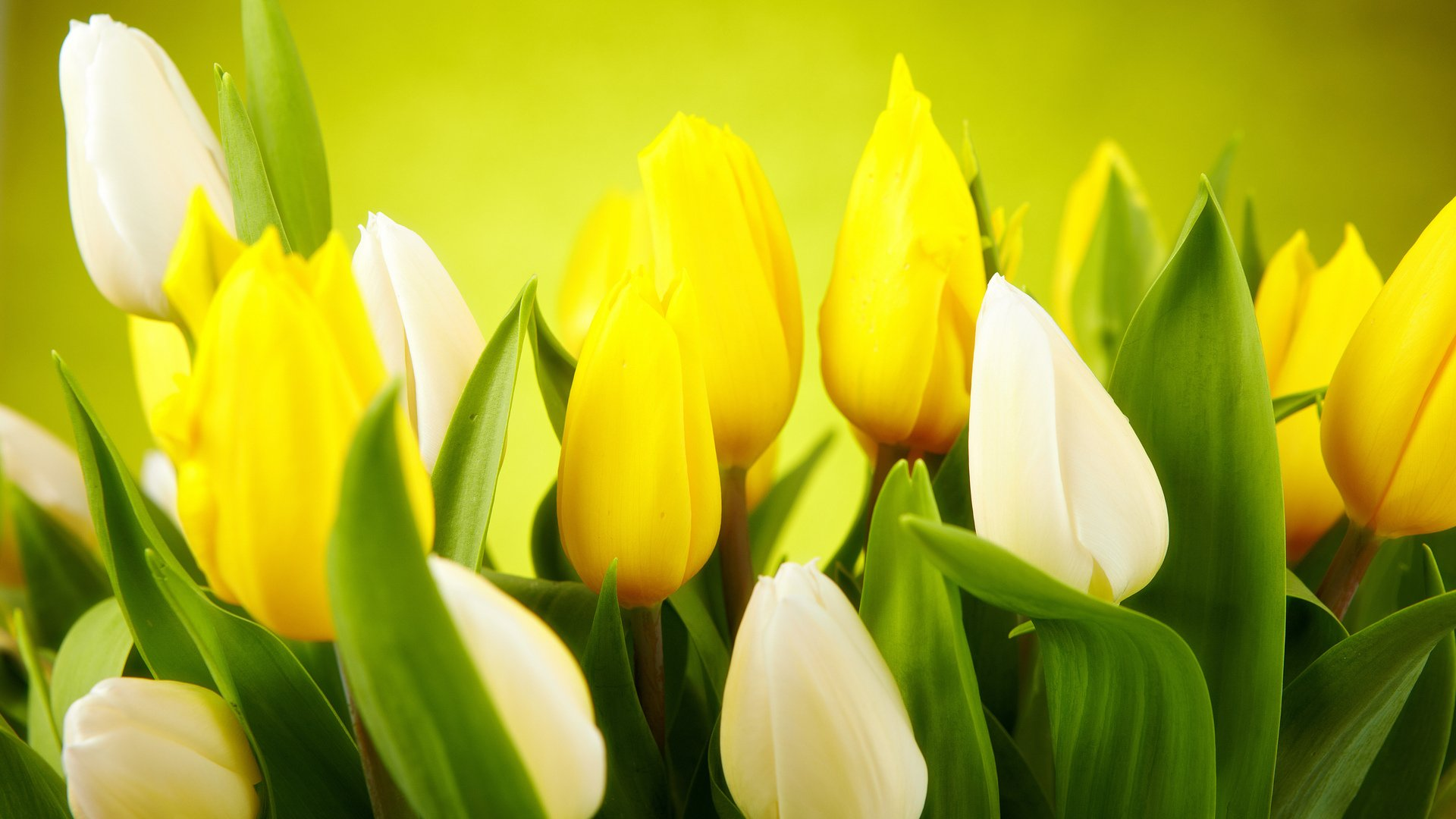 Весна фото на рабочий стол бесплатно