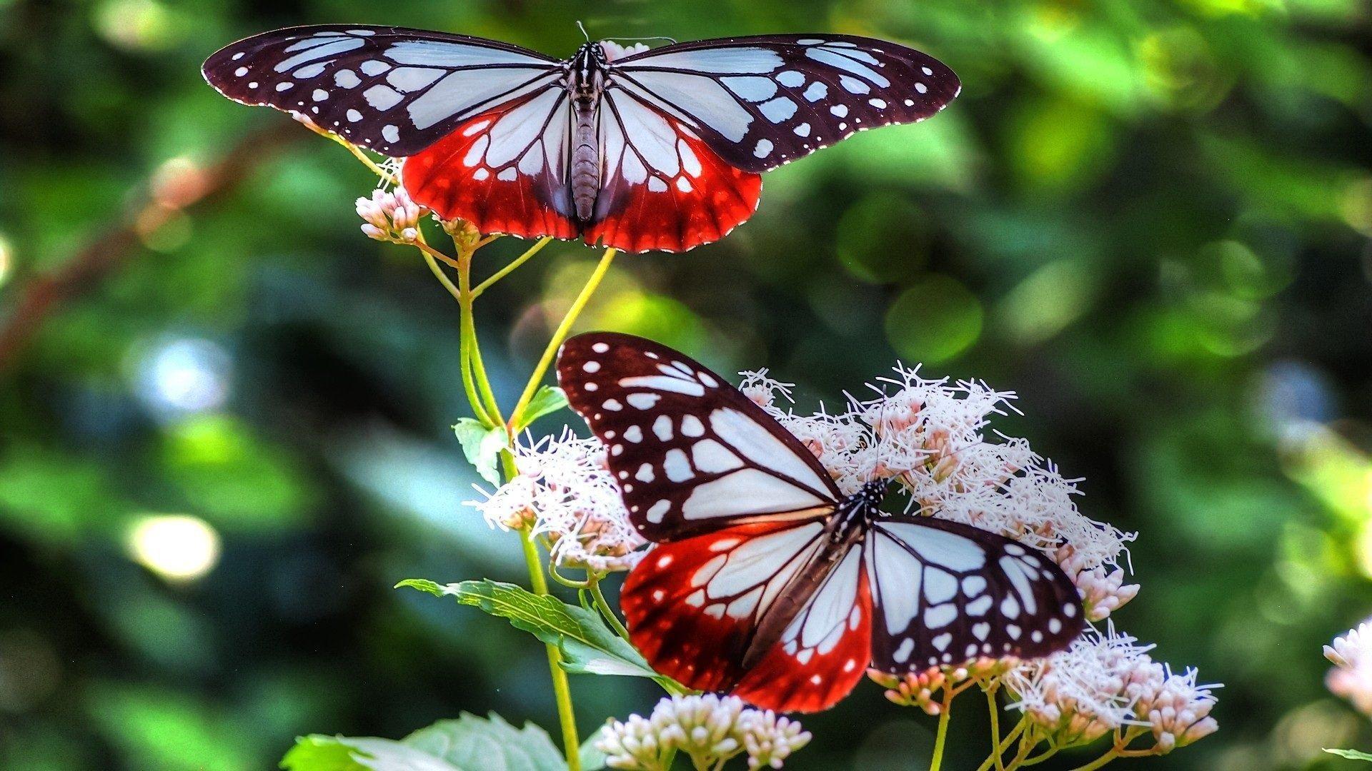 Бабочки на рабочий стол в хорошем качестве » DreemPics.com ...