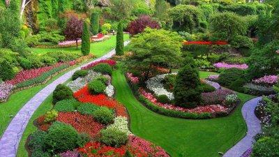 Цветы в саду картинки