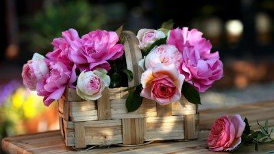 Фотографии цветов на рабочий стол